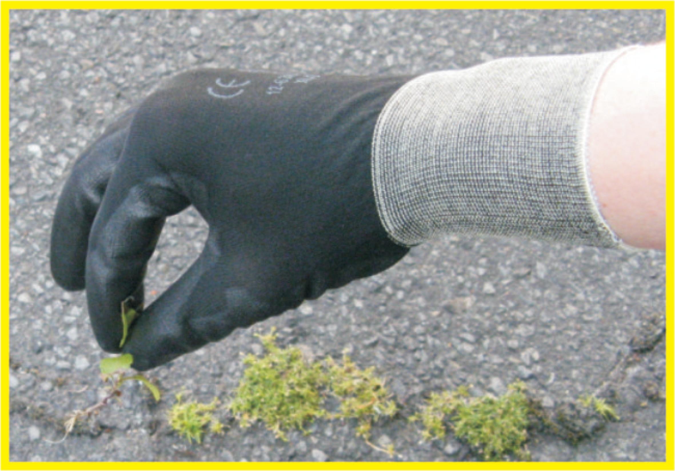 CONNEX Heim- und Gartenhandschuh, soft, feinfühlig, Größe 7